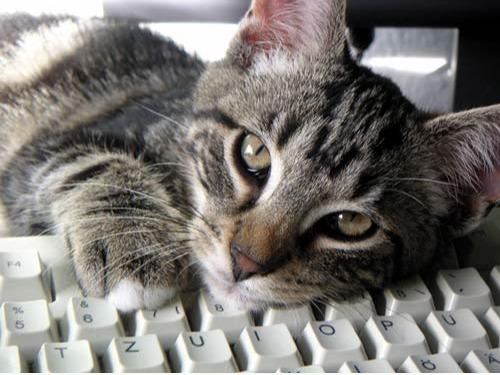 Mit Tieren sprechen lernen: Onlinekurs! 🐾👣 - auf Triviar