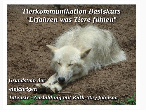 Tierkommunikation Basis-Kurs  15/16 Mai 2021 - auf Triviar